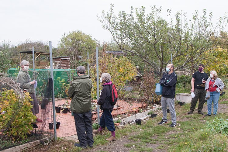 Fruit Tree Sale, October 2020